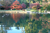 Reflections at the Japanese Gardens, Maymont Park